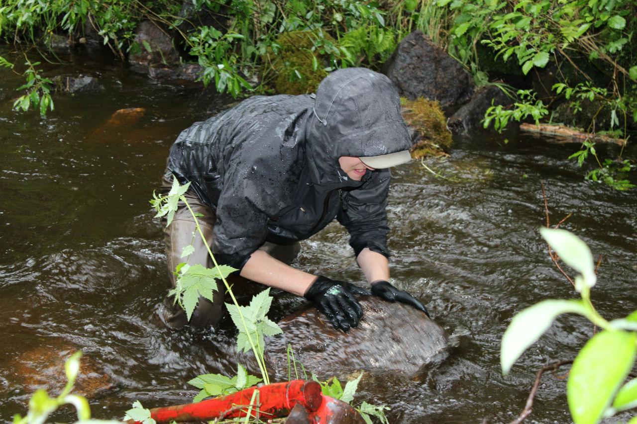 Naamankajoen kunnostustalkoot. Kivien siirtoa veden virtaaman muuttamiseksi.